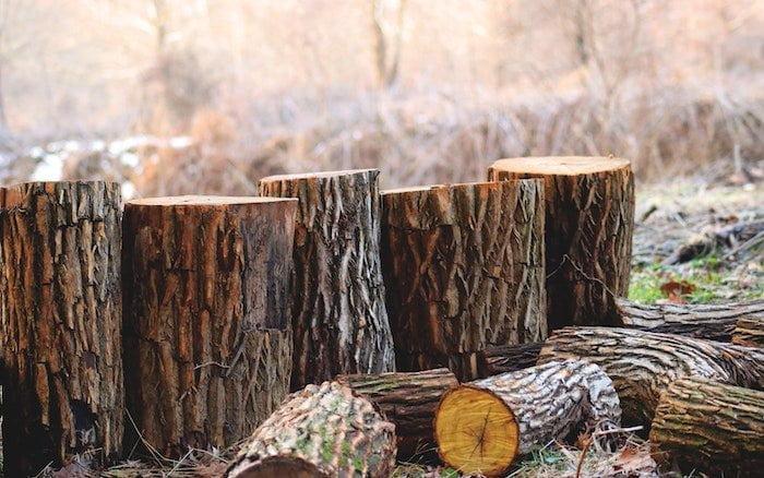 Wood Element: Spring